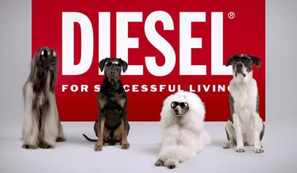 Diesel SS12 Eyewear